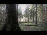 Подари Дерево.РФ